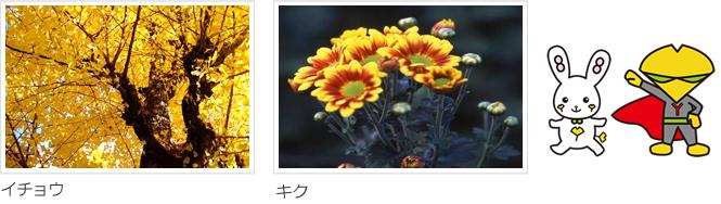 市の木・市の花